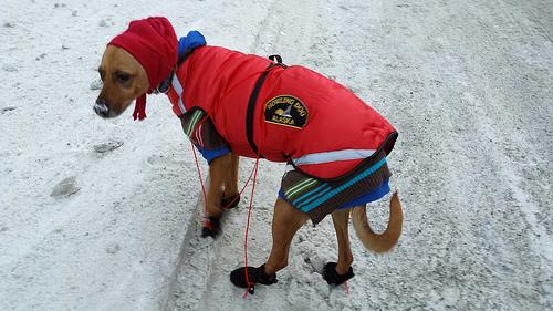 ダウンウェアは空気の層が大きく保温性が高いのが特徴です。防風性のある上着を着ることによって、冬場の厳しい寒さの中でも暖かさを保つことができます。