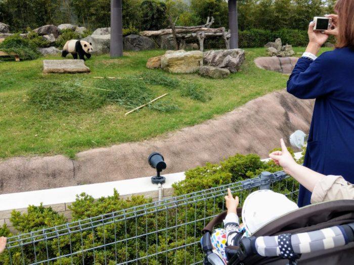動き回るパンダに大興奮