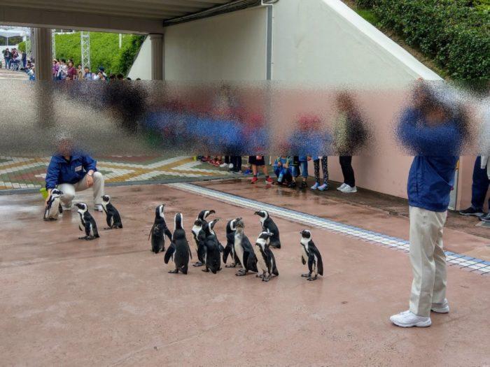 よちよち歩くペンギンパレード