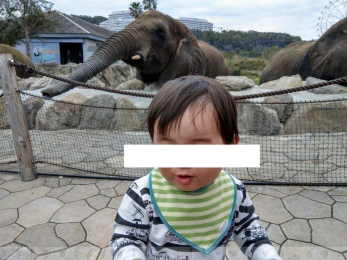 ゾウさんが大きすぎるので逃亡